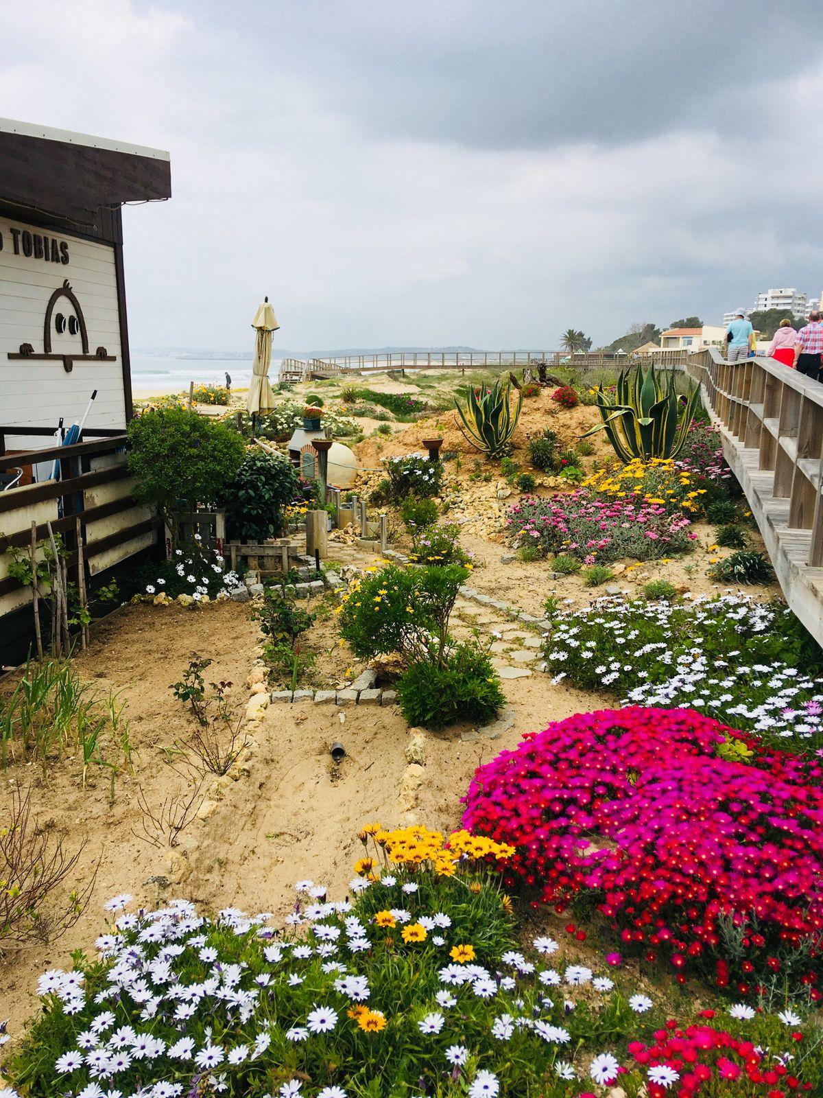 Virágok a tengerparton