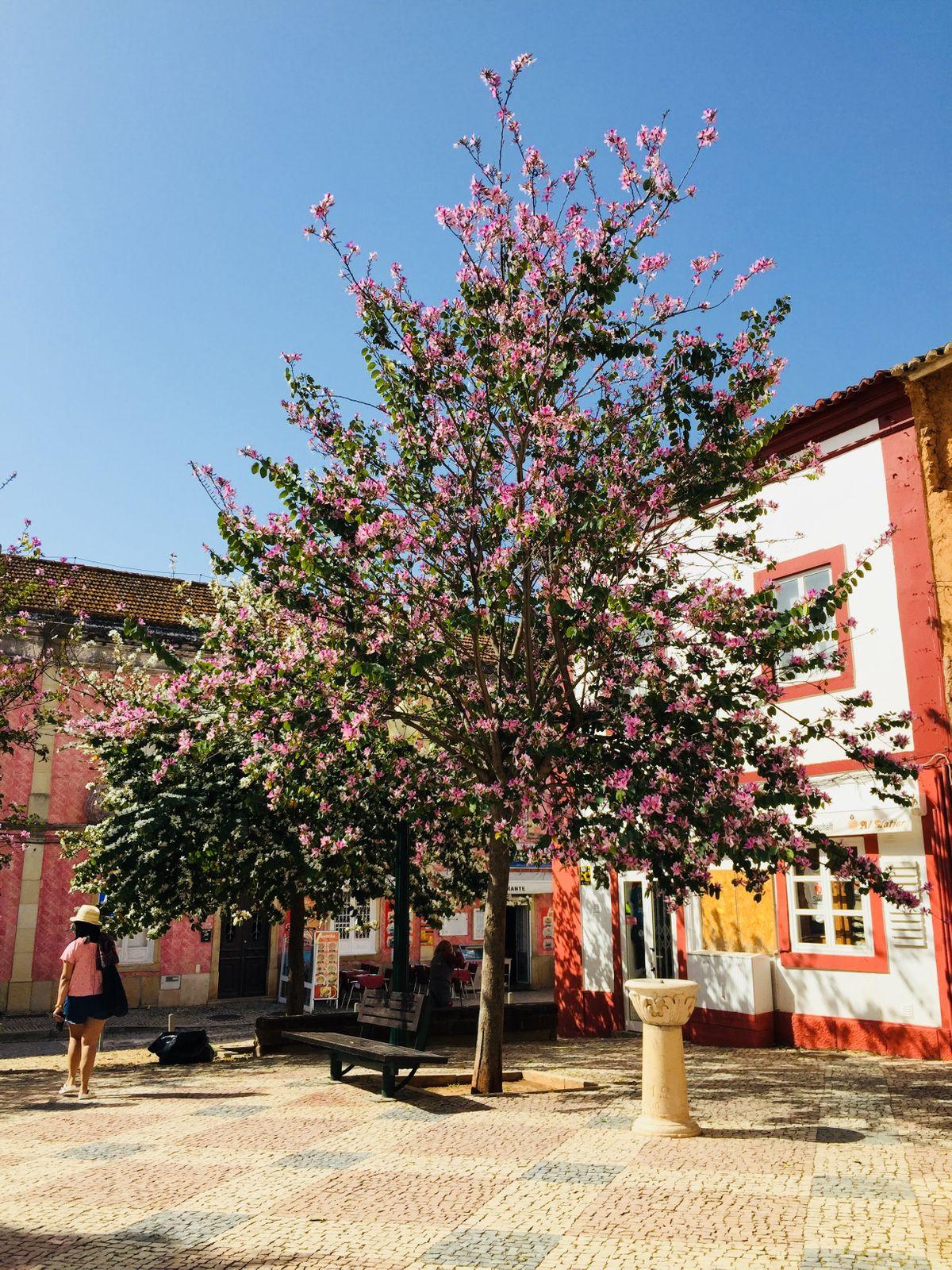 Virágzó fa Silvesben