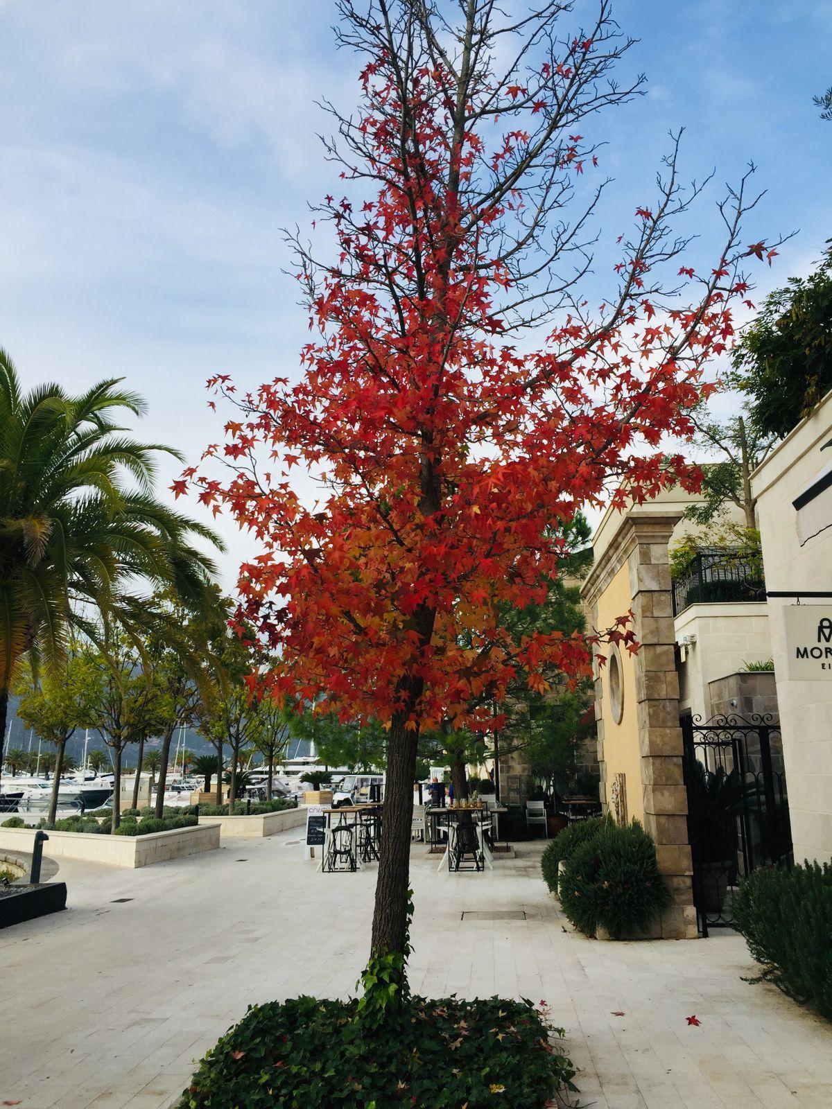 Őszi-színek
