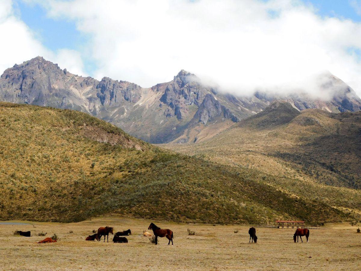 Vad-lovak-Cotopaxiban