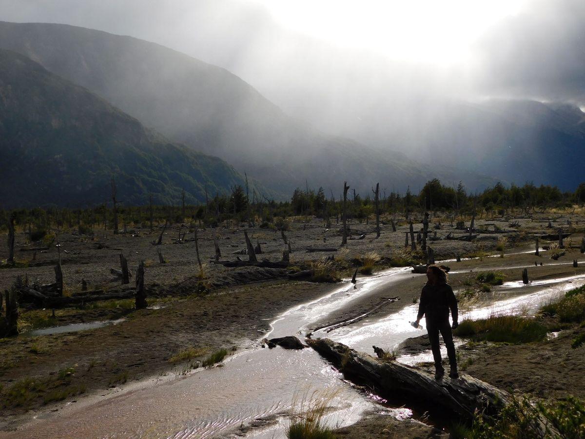 A Halott Erdő Völgye Carretera Austral