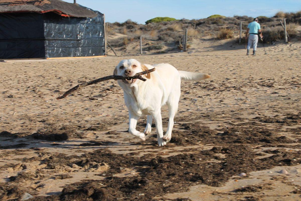 Játék a parton