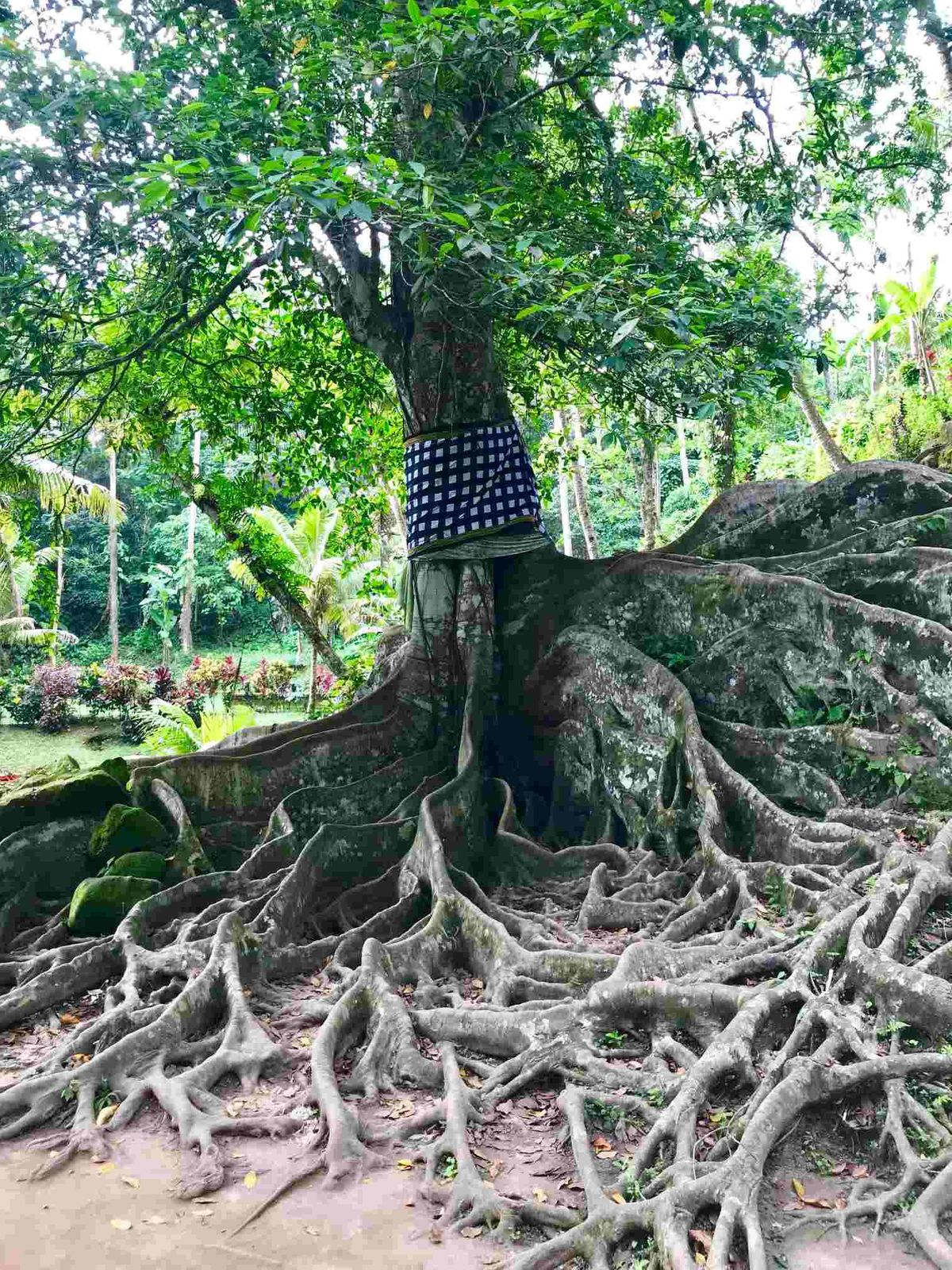 Szent fa