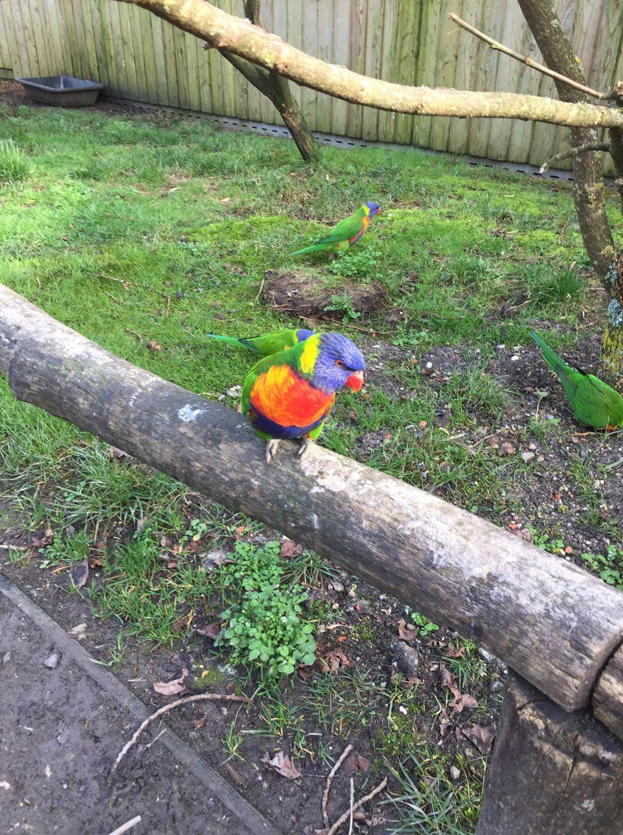 Papagáj-az-állatkertben